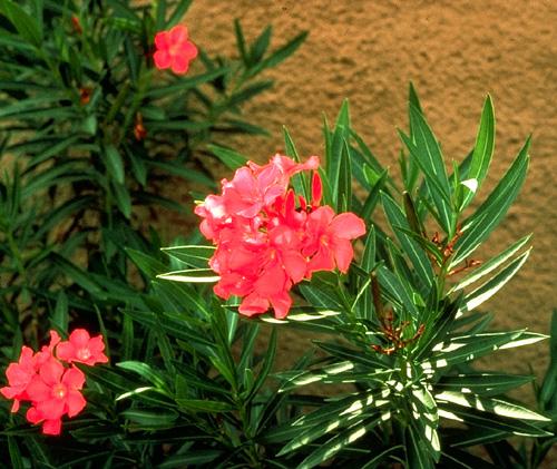 Invernantes Plantas Vivaces y Arbustos Muy Potted | Ganadores probados