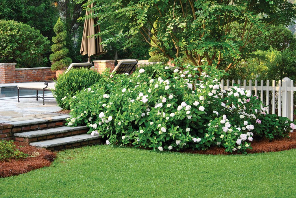 Scaping capital low maintenance landscaping plants