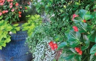 Landscaping and container garden