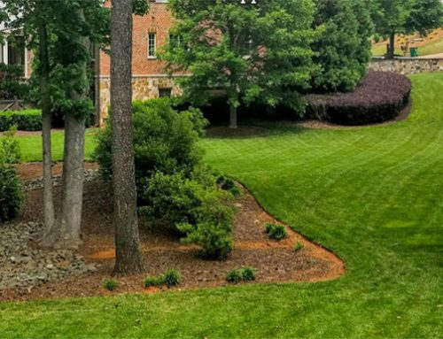 """NG Turf: Premium Sod from the Cutting Edge"""" of Turfgrass Research"""