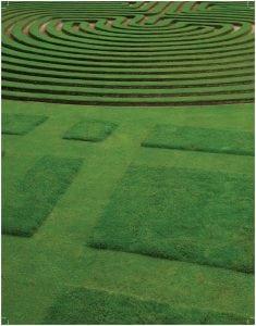 Healthy, green, farm-fresh sod by NG Turf