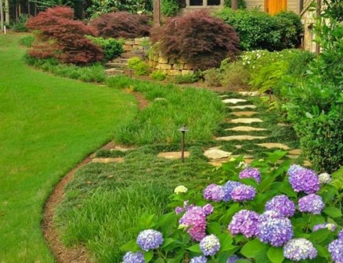 Q & A – How often should I mow for a lush lawn?