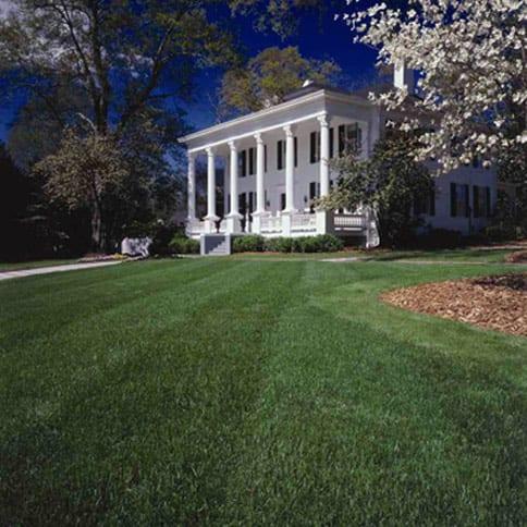 Front fescue lawn