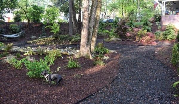 Backyard turned into a private dog park
