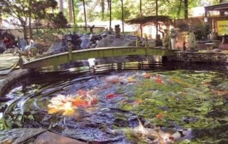 Koi pond with lots of fish, a bridge and yard accessories