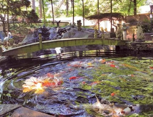 Turn to Splendor Koi and Pond For Everyday Essentials