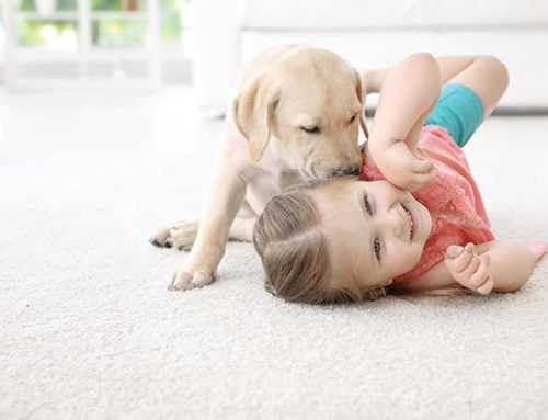 Take This Quiz From Enhance Floors & More To Find Your Best Flooring