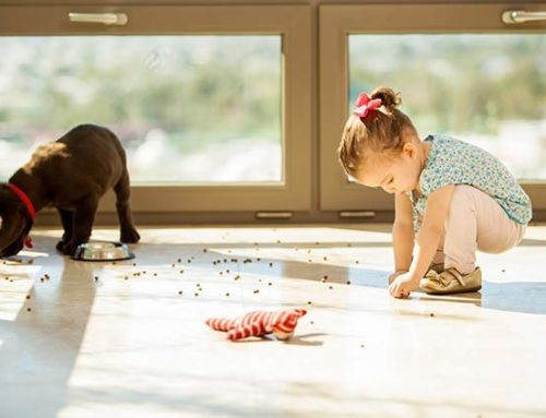 Q & A – I have young children and two dogs. What is the best type of flooring for my kitchen?